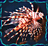 Lenny the Lion-fish